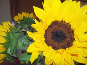 Birthday sunflowers
